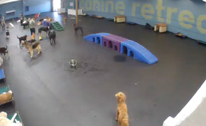 Pet Boarding, South Bay Live View 1
